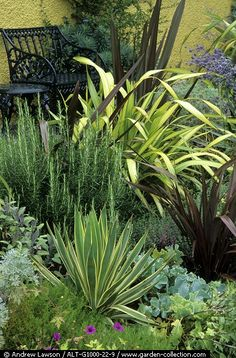 Phormiums, Yucca, Cordyline and Rosemary