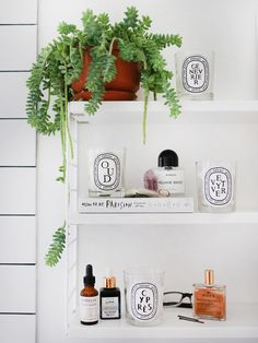 diptyque   indoor plants styling   interiors   decor