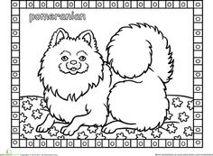 Worksheets: Color the Pomeranian
