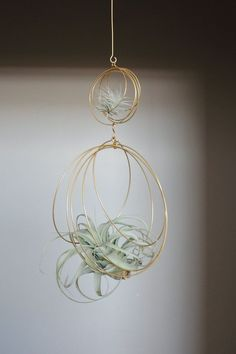 Air Plant Terrarium Kit And Stained Glass Inspiration Xerographica Tillandsia Ornament Air plant Holder Air Plant Display, Diy Plant Stand, Plant Decor, Plant Stands, Hanging Air Plants, Hanging Planters, Indoor Plants, Indoor Herbs, Indoor Gardening