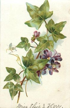 violets & ivy leaves, four purple flowers, one bud, one leaf & stalk at bottom