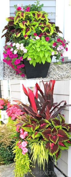 Showy, colorful and easy care shade plants and container gardens with vibrant foliage and flowers. 30+ designer plant lists to create gorgeous gardens with shade loving plants ! #ContainerGarden