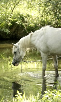 Horse at the pond.  #horses