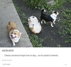 Dog Posts On Tumblr That Are Hard To Get Through Without Smiling