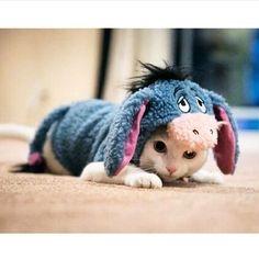 Eeyore kitty