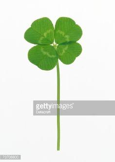 Stock Photo : A four-leaf clover                                                                                                                                                      More