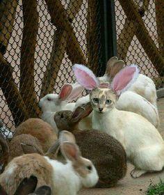 Parece que vi um coelhinho diferente !