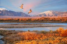 Two Sandhill Cranes fly over Great Sand Dunes National Park, Colorado