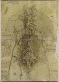 Woman's BodyCredit: The Royal Collection (c) 2012, Her Majesty Queen Elizabeth II Leonardo da Vinci began studying the human body to improve his paintings of the human form. But he soon threw himself into the study of anatomy. Here, an illustration of the cardiovascular system and major organs of a woman, drawn circa 1509-1510.