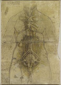 Woman's Body, an illustration of the cardiovascular system and major female organs, drawn c1509-1510 by Leonardo da Vinci.