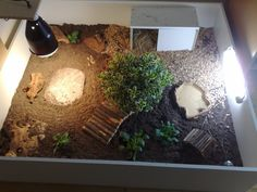 How to Properly Take Care of a Big Tortoise Tortoise House, Tortoise Habitat, Tortoise Table, Turtle Habitat, Baby Tortoise, Reptile Habitat, Reptile Cage, Tortoise Enclosure Indoor, Turtle Terrarium