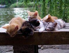 Pile O'Sleeping Kittehs.