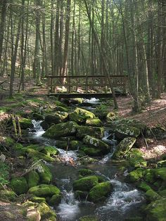 Hemlocks Trail footbridge, in Bald Eagle State Forest, Spring Township, Snyder County, Pennsylvania, USA. Author: Ruhrfisch. This file is licensed under the Creative Commons Attribution 3.0 Unported license - learn more about the license on the website. bridge, path, forest, tree, stream,