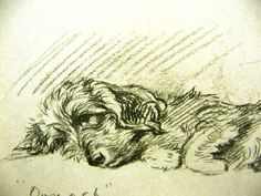 Lucy Dawson 1937 WIRE HAIRED DACHSHUND - VERY CUTE Vintage Dog Art Print Matted |