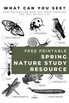 An opportunity for children to get creative and draw what signs of spring they can see in their own backyard!   To help you make the most of what nature has to offer in the spring, we've put together a nature study packet full of great printables for your young learner. We think it's a great way to incorporate the new season into your homeschooling day. Homeschool Worksheets, Homeschool Curriculum, Homeschooling, Nature Words, Bird Free, Spring Nature, Spring Sign, Nature Study, Natural World