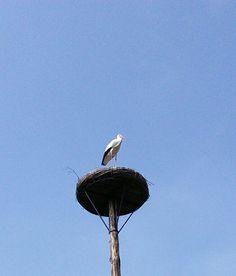 Op de uitkijk Gaja zoo