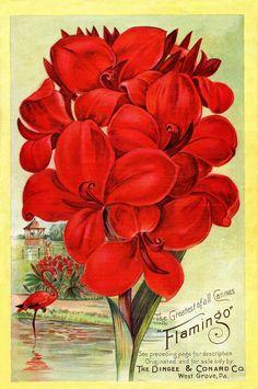 Cannas-Flamingo, Instant Art Printable - Seed Catalog Cover - Red Flowers, via graphicsfairy #diycrafts #ecrafty #seedcatalogs