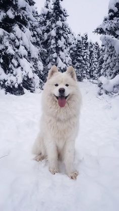 Every year I fall victim to SAD (Seasonal Affective Disorder). This year I started taking my neighbors dog for walks and his joy for life has kept me positive through the long winter. via aww on December 28 2018 at Cute Dogs Breeds, Cute Dogs And Puppies, Baby Dogs, I Love Dogs, Dog Breeds, Doggies, Beautiful Dogs, Animals Beautiful, Funny Animal Pictures