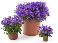 Garden Pool, Herb Garden, Flower Pots, Flowers, Ikebana, Wisteria, Planter Pots, Herbs, Exterior