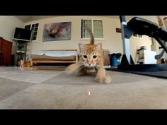 ▶ GoPro: Laser Cats - TV Commercial - YouTube