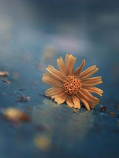 One's Heart by Eleonora Di Primo Flower Quotes, Dandelions, Blue Brown, Wallpaper, School, Plants, Everything, Art In Nature, Flowers