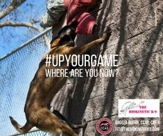 Need to Level-Up on a conditioning program? Need to get into a habit of fitting your program into your lifestyle. Need accountability? Up Your Game with a Program designed around you, your dog, your sport. Contact me today! Where Are You Now, Level Up, Program Design, Conditioning, Athletes, Your Dog, How To Get, Game, Lifestyle
