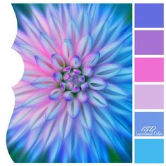 Inspirational Colors by Ilonka's Scrapbook Designs: Color Inspiration 207 Scheme Color, Color Schemes Colour Palettes, Colour Pallette, Color Palate, Color Combinations, Purple Color Schemes, Color Blending, Color Mixing, Colours That Go Together