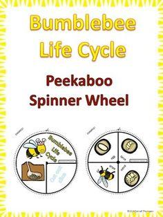 Bumblebee Life Cycle $