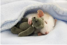 it's like a miniature cuddle fest