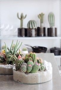 Der Kaktus ist eine pflegeleichte Zimmerpflanze