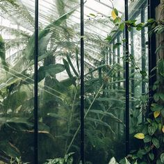 House goals or what?! #HaarkonGreenhouseTour