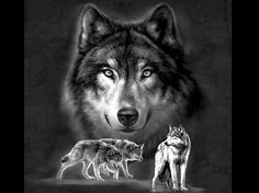 Wolves Animal Beautiful Cool Dogs Desktop Backgrounds ~ Dogs for ...