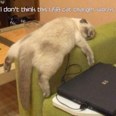22 Cats Who Have No Idea What They're Doing With Their Lives.