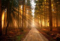forest - Google Search Forest Trail, Forest Path, Tree Forest, Misty Forest, Forest Road, Forest Wallpaper, Nature Wallpaper, 1920x1200 Wallpaper, Wallpapers