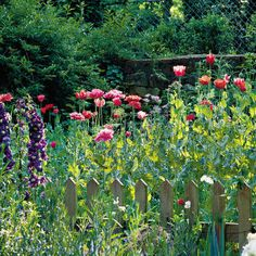 SELF SEEDING PLANTS> Flowers That Plant Themselves;  Sure, they're called annuals, but buy their seeds once, and you'll have blooms year after year.
