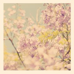 photography, purple nursery art, jacaranda tree photograph, Los Angeles blooms, blossoms powder blue spring delicate babys room via Etsy