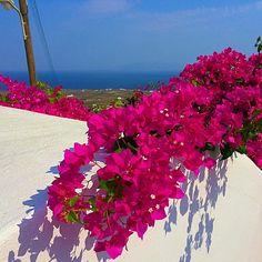 """☀️ Good Morning ☀️ ✨✨✨✨ Finikia's Place ✨✨✨✨ GREECE "" Greek Islands, Good Morning, Memories, Places, Instagram Posts, Nature, Beautiful, Greece, Italy"