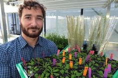 Post-graduate student Florian Rümpler from Jena University is the lead author of the publication, which explains how phytoplasmas destroy the life cycle of plants.