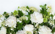 Download wallpapers white flowers, flower frame, spring, white roses