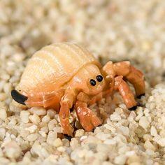 Miniature Hermit Crab
