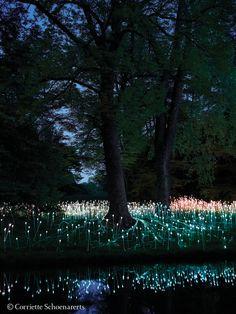 Field of Light Installation at Longwood Gardens  #lightatlongwood