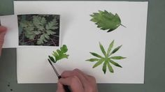 Watercolour Flowers Course - Leaves Lesson (by Sian Dudley) - clearly explained and super helpful. Check out full course!