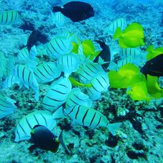 #Hawaii #scuba #diving http://ift.tt/1Pfghc2 @hawaiiscubadiving