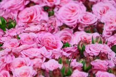 6 Hidden uses of Rose Petals - SimplyBeyondHerbs Red Rose Images Hd, Beautiful Rose Flowers Images, Love Flowers, Uses Of Rose, Uses For Rose Petals, Rose Petal Uses, Red Rose Love, Bulk Roses, Wholesale Roses