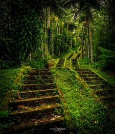 forest - Google Search Vineyard, Country Roads, Outdoor, Google Search, Outdoors, Vine Yard, Vineyard Vines, Outdoor Games, The Great Outdoors