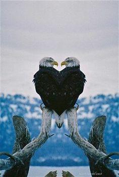 Bald eagle of Prey Pretty Birds, Love Birds, Beautiful Birds, Animals Beautiful, Eagle Pictures, Animal Pictures, Photo Aigle, Aigle Animal, Animals And Pets