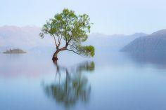 Bird In A Lone Willow Tree On Lake Wanaka (Explore #1)