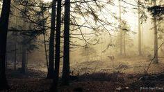 Fotogalerija lovske družine Loka Črnomelj
