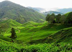 Malasia | Insolit vi