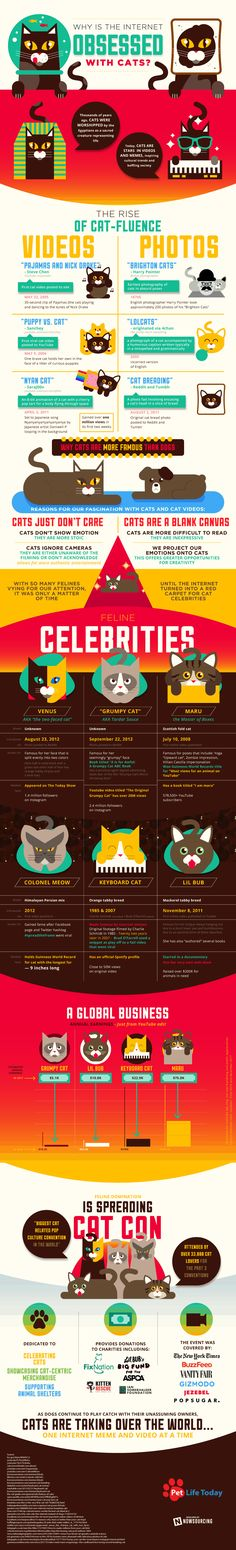 Why is the Internet so obsessed with cats? This infographic chronicles cats' fame and glorification online.